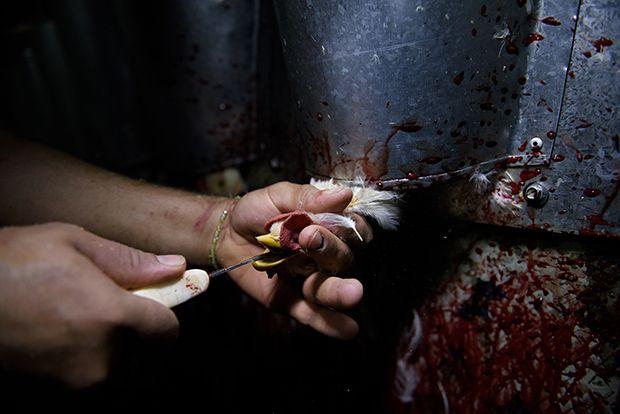 【ショッキング】メキシコ屠殺場で食肉へと加工される動物たち、家畜さんの目がヤバい・・・・・(画像)・4枚目