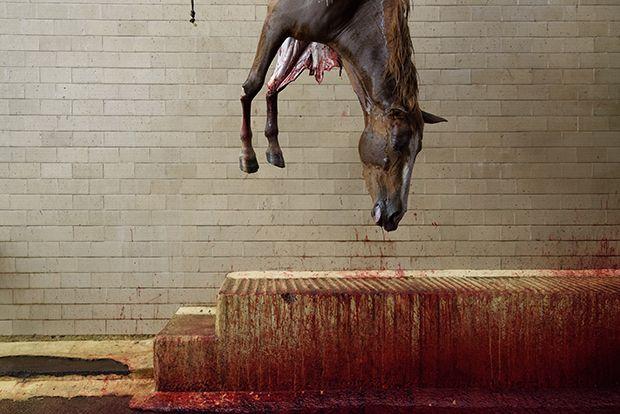 【ショッキング】メキシコ屠殺場で食肉へと加工される動物たち、家畜さんの目がヤバい・・・・・(画像)・7枚目