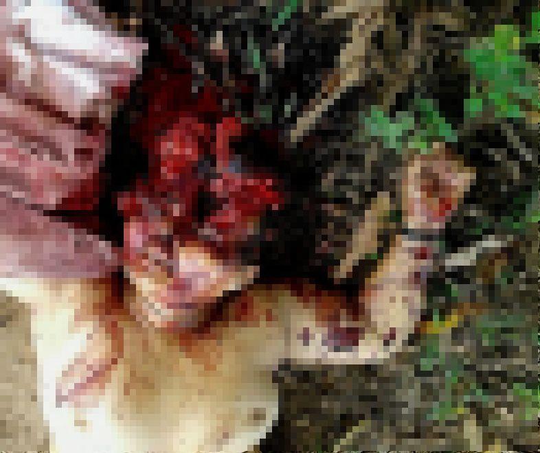 【グロ注意】山中で見つかったレイプ被害者の遺体、頭部全体がカチ割られる・・・・・(画像)・1枚目