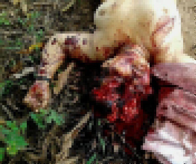 【グロ注意】山中で見つかったレイプ被害者の遺体、頭部全体がカチ割られる・・・・・(画像)・2枚目