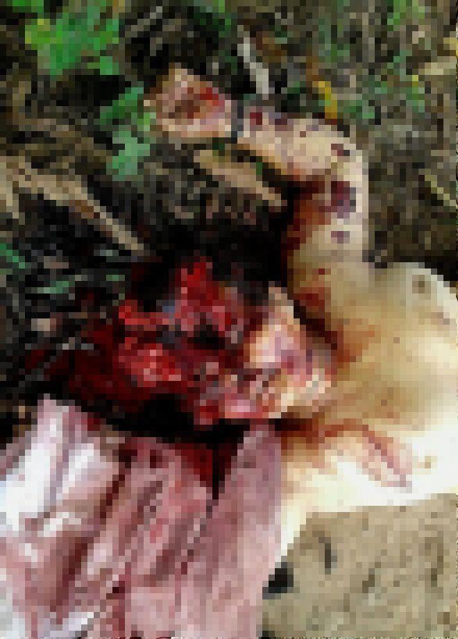 【グロ注意】山中で見つかったレイプ被害者の遺体、頭部全体がカチ割られる・・・・・(画像)・3枚目
