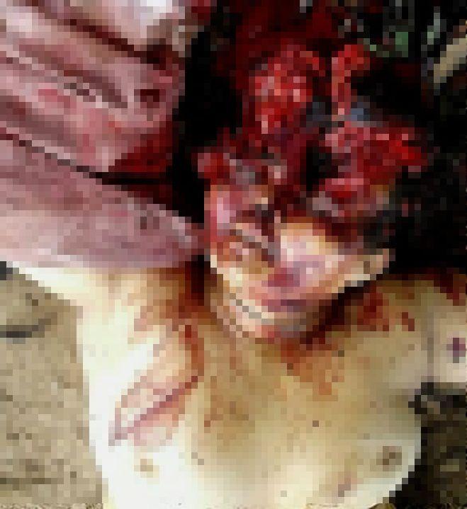 【グロ注意】山中で見つかったレイプ被害者の遺体、頭部全体がカチ割られる・・・・・(画像)・4枚目