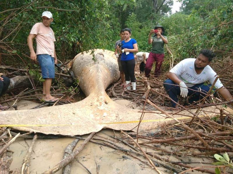 【衝撃】マングローブ生い茂るブラジルのマラギオ島ジャングルでとんでもないモノが発見される!!(画像、動画)・1枚目