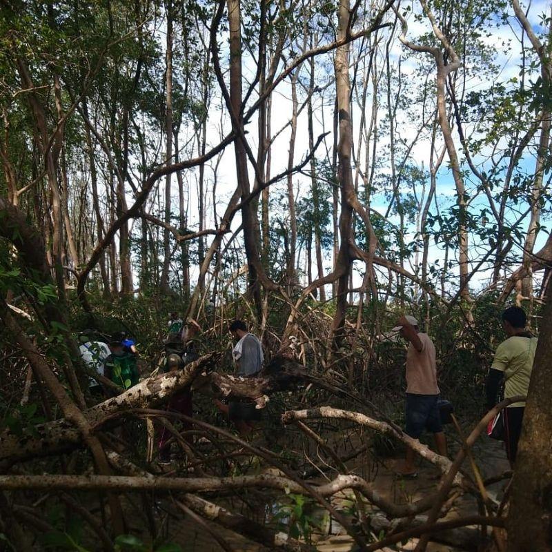 【衝撃】マングローブ生い茂るブラジルのマラギオ島ジャングルでとんでもないモノが発見される!!(画像、動画)・2枚目