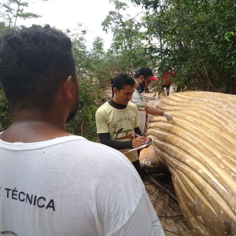 【衝撃】マングローブ生い茂るブラジルのマラギオ島ジャングルでとんでもないモノが発見される!!(画像、動画)・4枚目