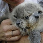 【閲覧注意】世にも珍しい結合双生児の動物、グロじゃないけどちょっとキツい・・・・・(画像)