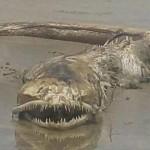 【UMA】メキシコ マサトランのビーチで発見された奇妙な生き物、マジで何だコレ・・・・・(画像)