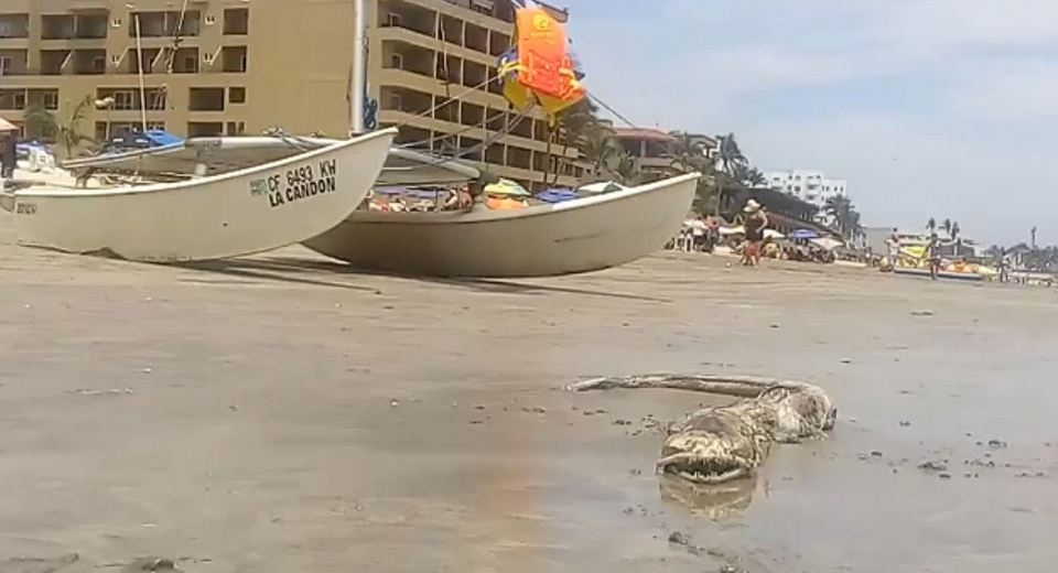 【UMA】メキシコ マサトランのビーチで発見された奇妙な生き物、マジで何だコレ・・・・・(画像)・1枚目