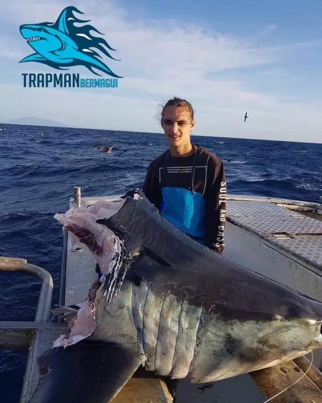 【驚愕】体長4メートル体重500kgの巨大サメを捕食する謎のUMA、メガロドンか!?(画像)・1枚目
