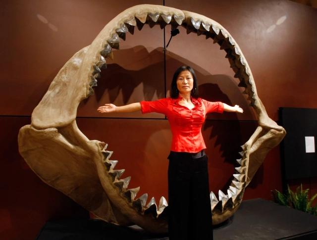 【驚愕】体長4メートル体重500kgの巨大サメを捕食する謎のUMA、メガロドンか!?(画像)・2枚目
