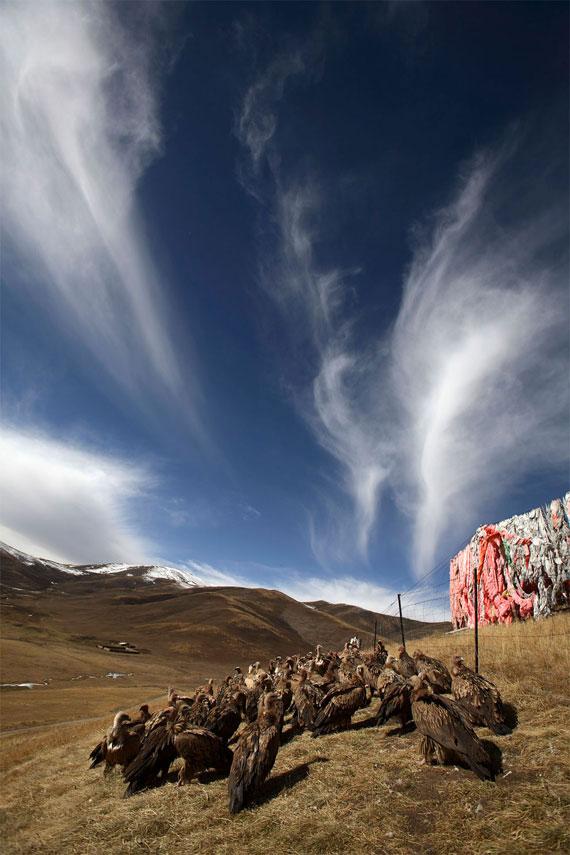 【グロ注意】チベットに今も伝わる鳥葬、文化としてはともかく見た目がグロい・・・・・(画像)・2枚目