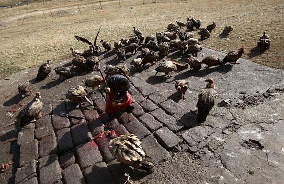 【グロ注意】チベットに今も伝わる鳥葬、文化としてはともかく見た目がグロい・・・・・(画像)・5枚目