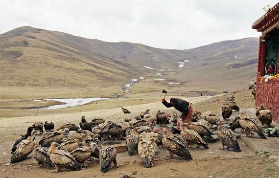 【グロ注意】チベットに今も伝わる鳥葬、文化としてはともかく見た目がグロい・・・・・(画像)・6枚目