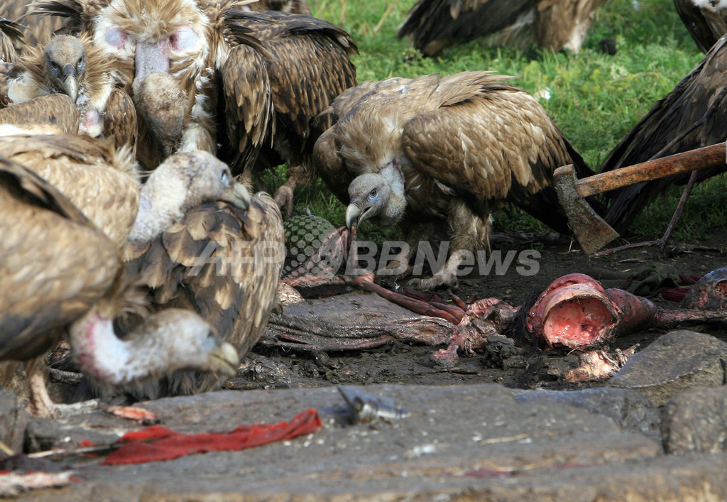 【グロ注意】チベットに今も伝わる鳥葬、文化としてはともかく見た目がグロい・・・・・(画像)・7枚目