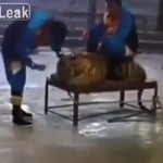 【動物虐待】サーカスの裏側で調教師に虐待される虎さん、可哀想だけども・・・・・(動画)