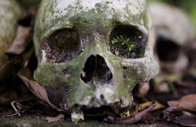 """【自然派】インドネシア バリ島のトルニャン村に伝わる""""風葬""""という埋葬方法、凄い光景・・・・(画像)・4枚目"""