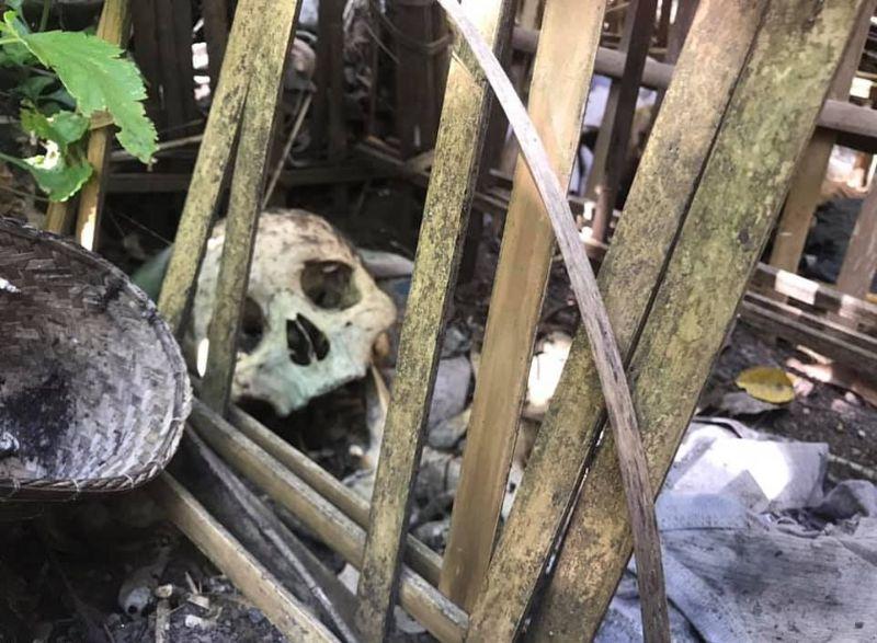 """【自然派】インドネシア バリ島のトルニャン村に伝わる""""風葬""""という埋葬方法、凄い光景・・・・(画像)・11枚目"""