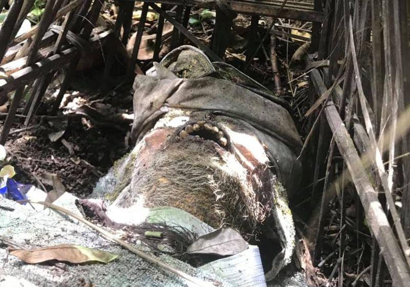"""【自然派】インドネシア バリ島のトルニャン村に伝わる""""風葬""""という埋葬方法、凄い光景・・・・(画像)・12枚目"""