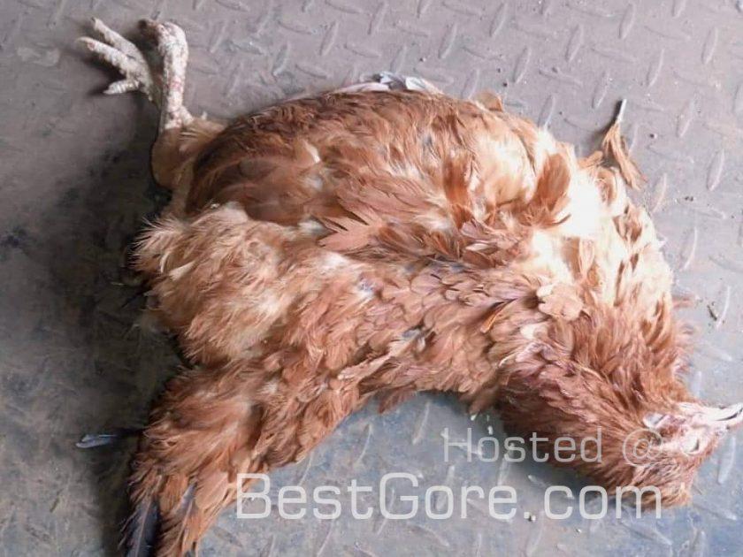 【性欲モンスター】鶏をレイプし次にアヒルをレイプしようとしたケニア人ニキ、持ち主にボッコボコにされる!!(画像)・3枚目