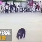 【パニック】中国の動物園でチンパンジーが脱走、男性客にドロップキックを喰らわせる!!(動画)