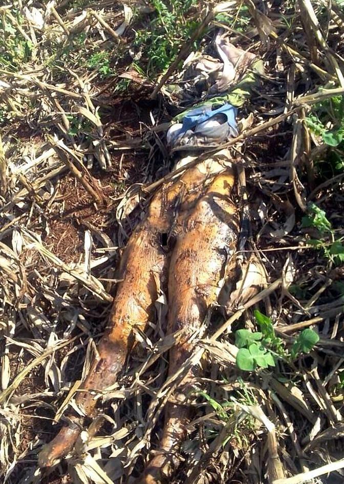 【恐怖】ブラジルで発見された一年前レイプされ放置された女性の遺体、完全にミイラになってる・・・・・(画像)・1枚目