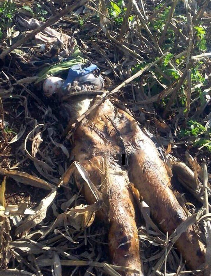 【恐怖】ブラジルで発見された一年前レイプされ放置された女性の遺体、完全にミイラになってる・・・・・(画像)・2枚目