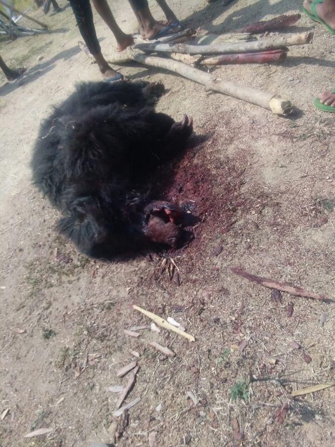 【超閲覧注意】インドで野生の熊に襲われた男性、顔面をグチャグチャにされるも辛うじて生還・・・・・(画像)・4枚目