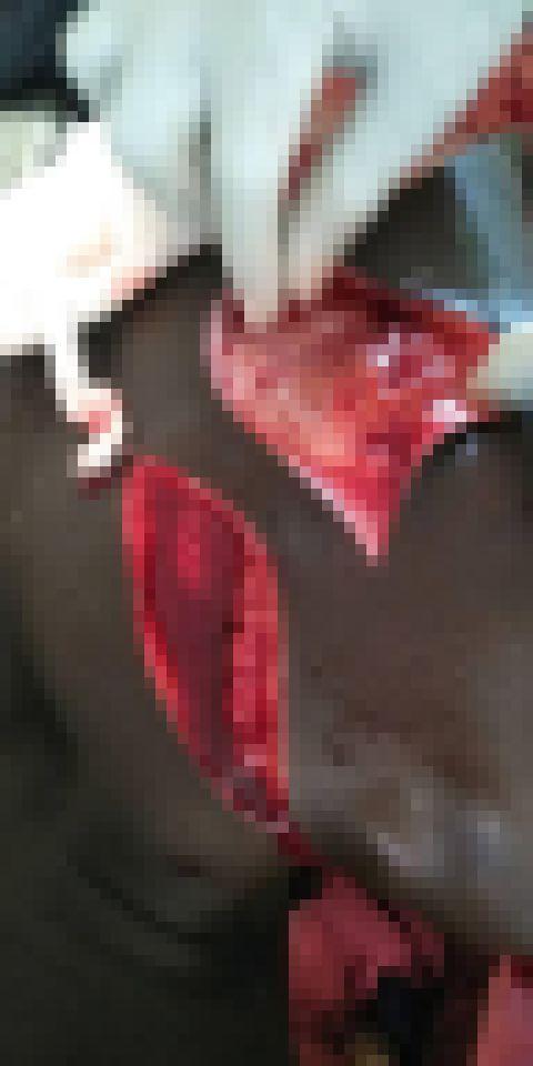 """【グロ注意】アフリカ随一の戦闘民族""""フラニ族""""、仲間を殺された復讐に周囲の部族を無差別に切り刻む!!(画像)・2枚目"""