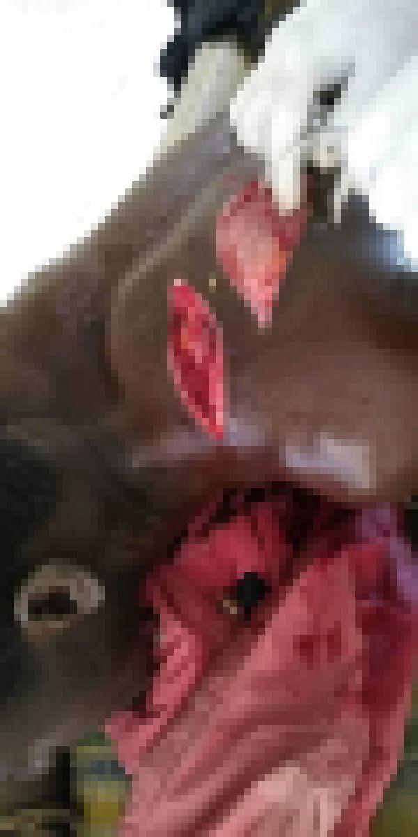 """【グロ注意】アフリカ随一の戦闘民族""""フラニ族""""、仲間を殺された復讐に周囲の部族を無差別に切り刻む!!(画像)・4枚目"""