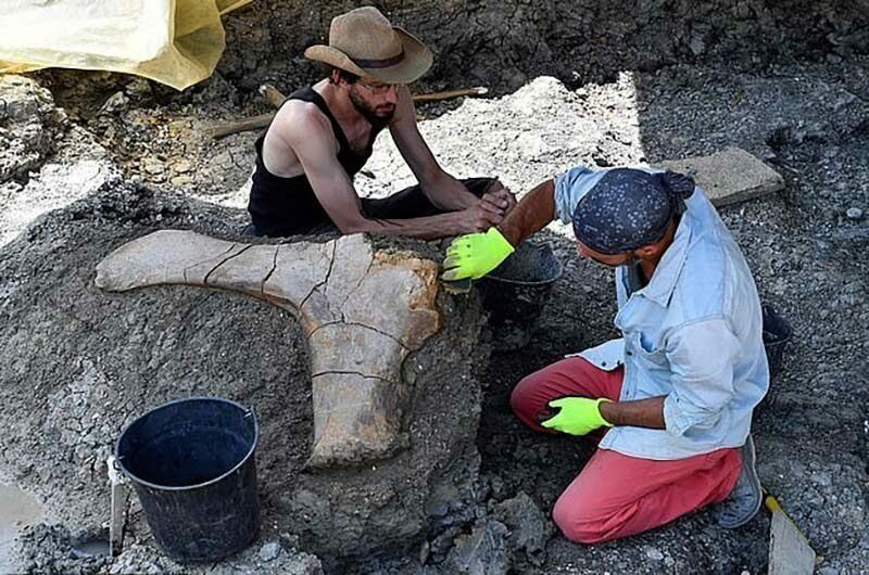 【ロマン】フランスで発掘された巨大な恐竜の大腿骨、足一本の膝下だけで重量500㎏とか!!・2枚目