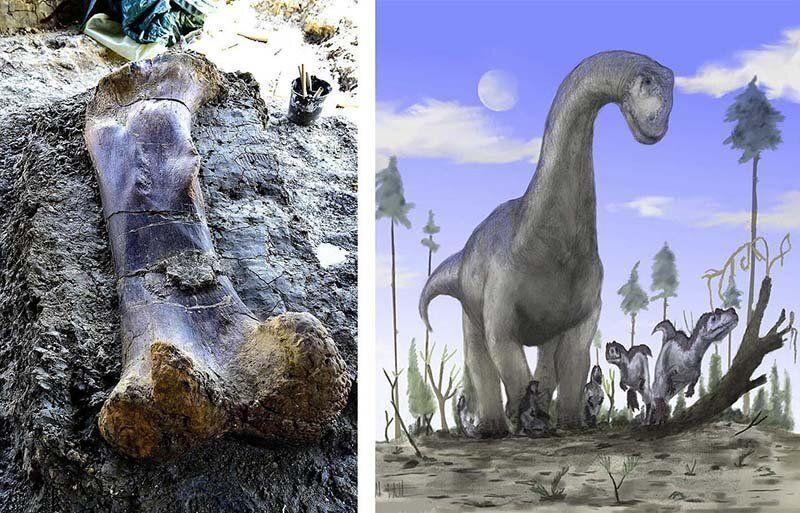 【ロマン】フランスで発掘された巨大な恐竜の大腿骨、足一本の膝下だけで重量500㎏とか!!・4枚目