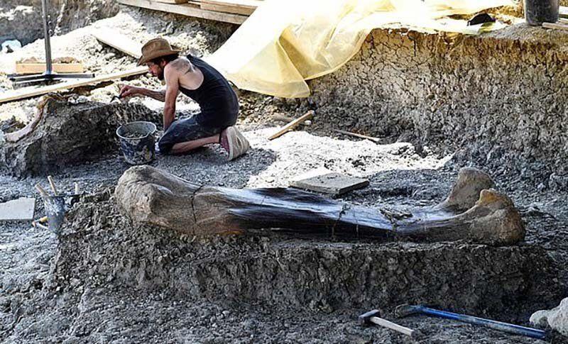 【ロマン】フランスで発掘された巨大な恐竜の大腿骨、足一本の膝下だけで重量500㎏とか!!・5枚目