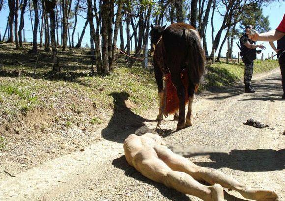 【グロ注意】西部劇の拷問よろしく裸で馬に引きずられた男性、すりおろされる・・・・・(画像)・1枚目