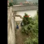 【野生のパワー】中国で撮影されたトリックジャンプを決めるおサルさん、身体能力スゲェ!!(動画)