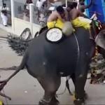 【超パワー】南インド、お祭りで背中に人を乗せて暴走しちゃってるぞうさんマジヤベェ!!(動画)