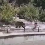 【超危険】ポーランドの酔っぱらいおじさん、クマの檻に侵入してガチの喧嘩をしてしまう!!(動画)