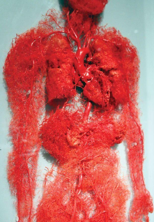 【恐怖画像】人体を無数に走る血管、ソレ以外を除去したら・・・・ホラー過ぎだろ!!(画像あり)・1枚目