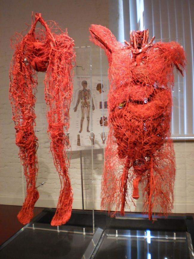 【恐怖画像】人体を無数に走る血管、ソレ以外を除去したら・・・・ホラー過ぎだろ!!(画像あり)・2枚目