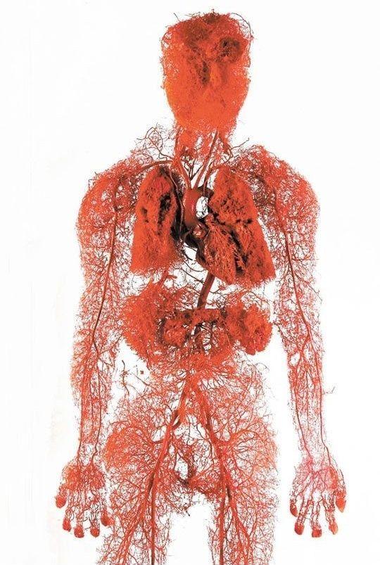 【恐怖画像】人体を無数に走る血管、ソレ以外を除去したら・・・・ホラー過ぎだろ!!(画像あり)・3枚目