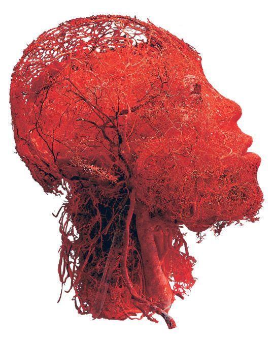 【恐怖画像】人体を無数に走る血管、ソレ以外を除去したら・・・・ホラー過ぎだろ!!(画像あり)・5枚目