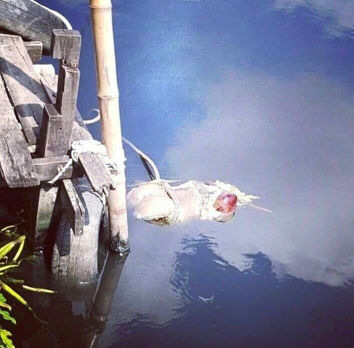 【グロ注意】タイで行方不明になった巨乳美女、レイプされこんな姿になって発見される・・・・(画像)・3枚目