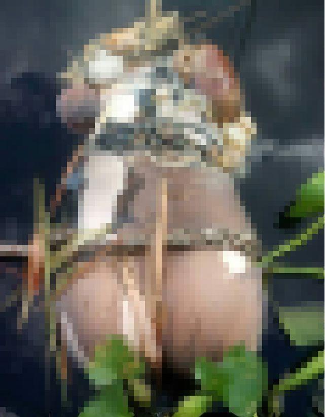 【グロ注意】タイで行方不明になった巨乳美女、レイプされこんな姿になって発見される・・・・(画像)・4枚目