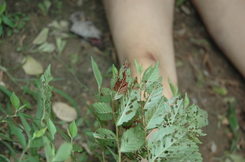 【閲覧注意】レイプされ殺害された中国人女性さん、警察の手によってレイプ遺体の画像がネットに公開される・・・・・(画像)・7枚目