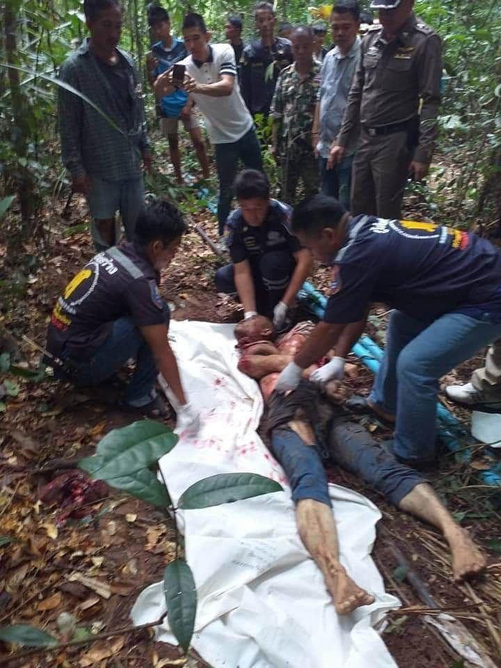 【プチュン!!】タイのジャングルで野生の象に踏み潰された青年、色々中身が飛び出してしまう・・・・・(画像あり)・3枚目