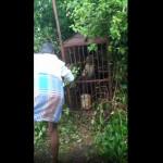【イキリ爺】制止する周囲を無視して捕らえた豹をオリ越しにおちょくる爺さん、案の定な流れで草wwwwwww(動画)